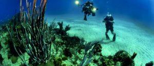 해조류로 자궁경부암 바이러스 억제 물질 개발(海藻で子宮頸癌ウイルス抑制物質を開発)