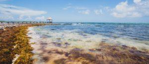 海藻の世界 国の数だけレシピあり?